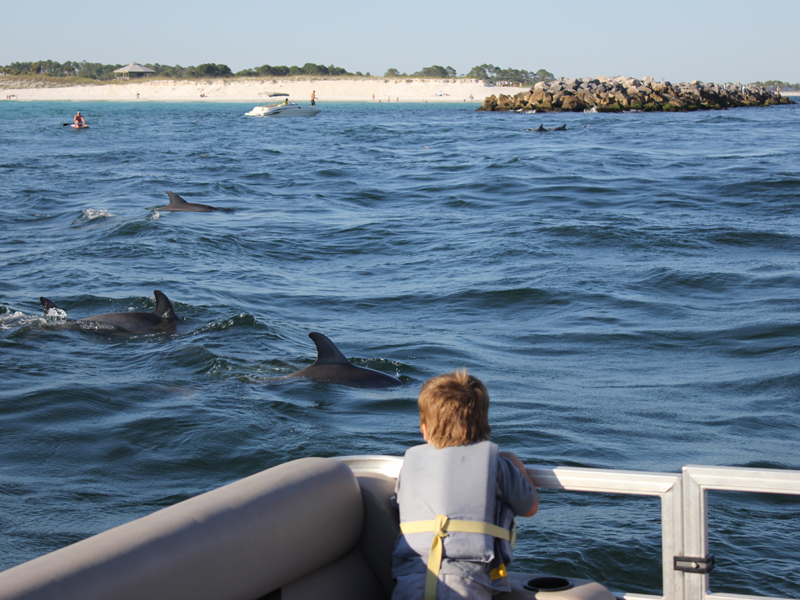 Pontoon Boat Rentals Watching Dolphins
