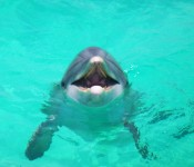 Dolphin Tours Panama City Beach