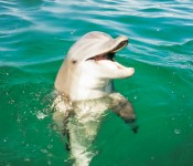 Boat Dolphin Tours