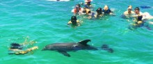 Dolphin Boat Tours