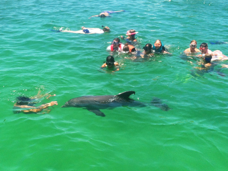 dolphin-tour-swimming-with-dolphin
