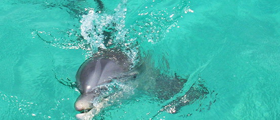 panama-city-beach-dolphin-cruise-swim
