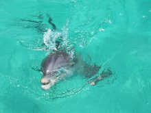 shell-island-cute-dolphin-snorkel-tour