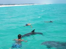 shell-island-swim-with-dolphins