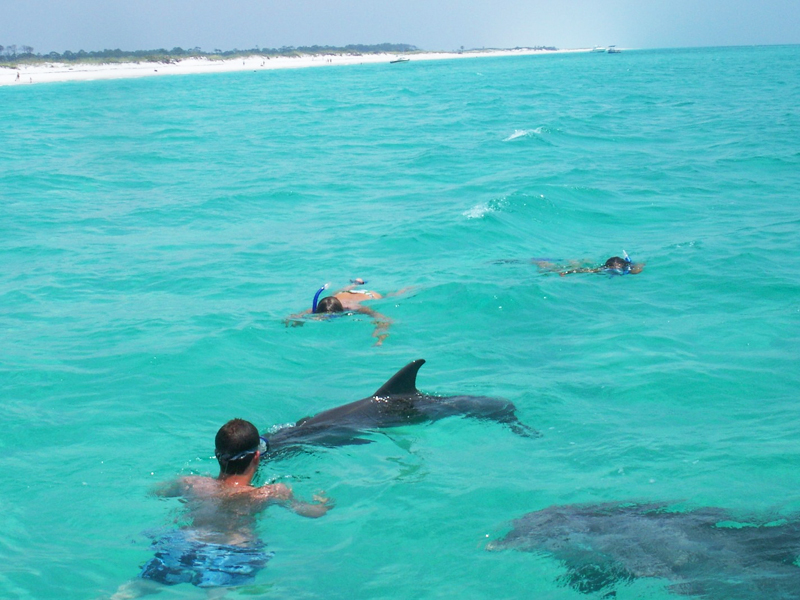 Shell Island Swim With Dolphins