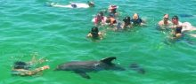 group-swimming-with-wild-dolphin